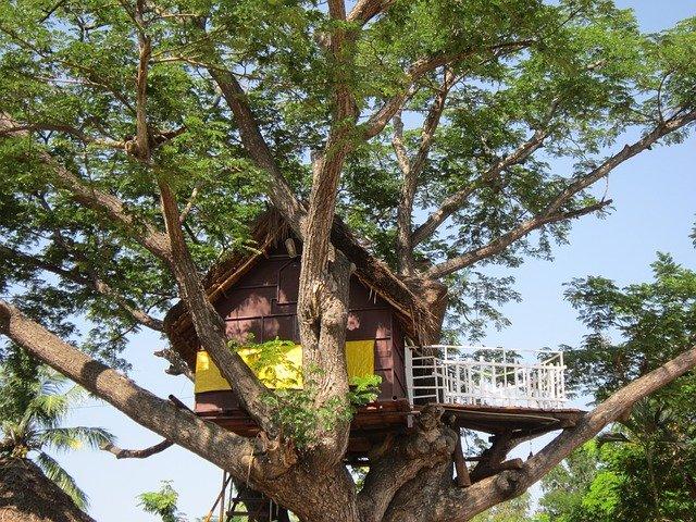 domek na strome